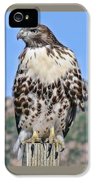 Red Tail Hawk Youth IPhone 5 Case by Jennie Marie Schell