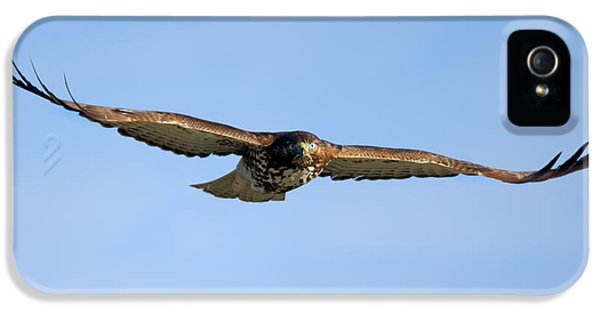Red -tail Stare IPhone 5 Case by Mike Dawson