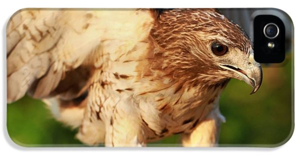 Red Tailed Hawk Hunting IPhone 5 Case