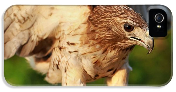 Red Tailed Hawk Hunting IPhone 5 Case by Dan Sproul