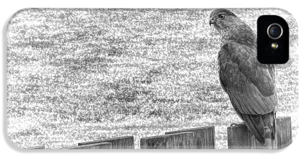 Red Tailed Hawk  IPhone 5 Case by Olivier Le Queinec