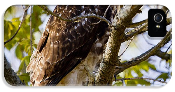 IPhone 5 Case featuring the photograph Red Tailed-hawk by Ricky L Jones