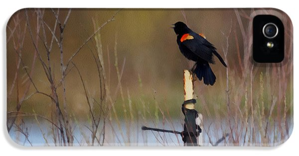 Red Winged Blackbird 2 IPhone 5 / 5s Case by Ernie Echols