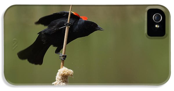 Red Winged Blackbird 3 IPhone 5 / 5s Case by Ernie Echols