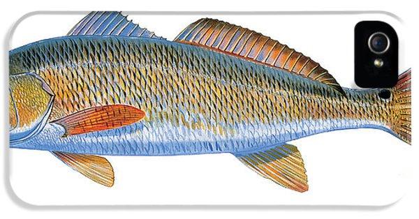Drum iPhone 5 Case - Redfish by Carey Chen