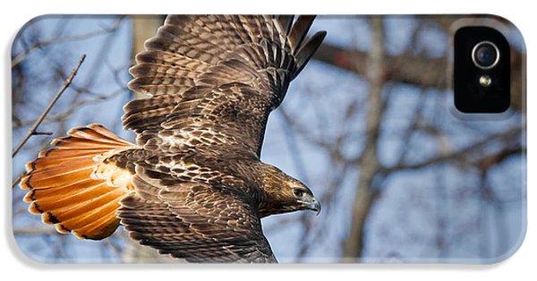 Redtail Hawk IPhone 5 Case by Bill Wakeley