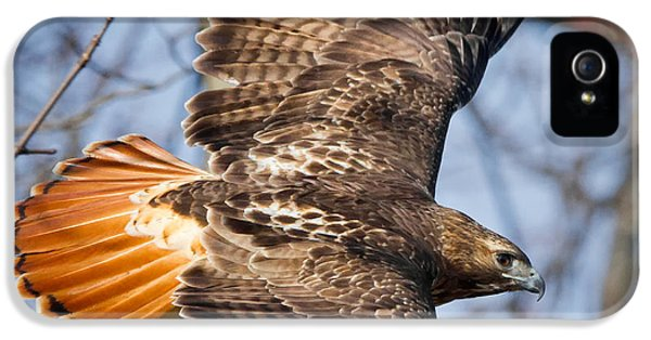 Redtail Hawk Square IPhone 5 Case by Bill Wakeley