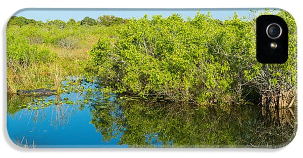 Anhinga iPhone 5 Case - Reflection Of Trees In A Lake, Anhinga by Panoramic Images