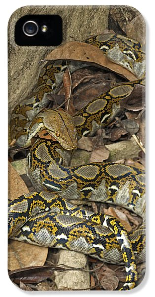 Reticulated Python IPhone 5 Case