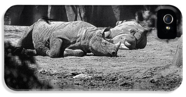 Rhino Nap Time IPhone 5 Case by Thomas Woolworth
