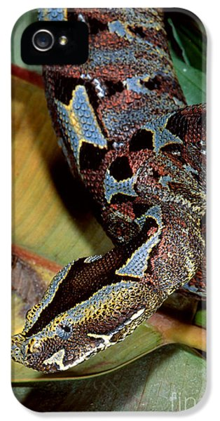 Rhino Viper IPhone 5 Case by Gregory G. Dimijian, M.D.