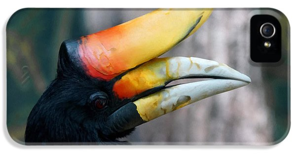 Rhinoceros Hornbill  IPhone 5 / 5s Case by Ernie Echols