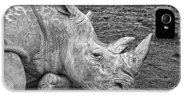 Rhinoceros IPhone 5 Case by Nancy Aurand-Humpf