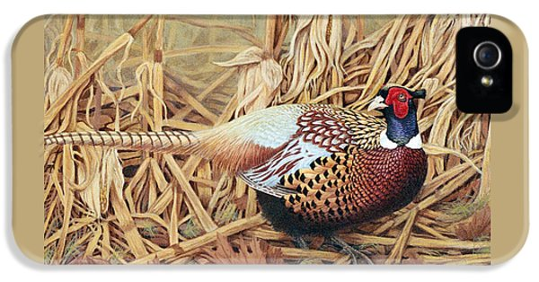 Pheasant iPhone 5 Case - Ring-necked Pheasant by Ken Everett