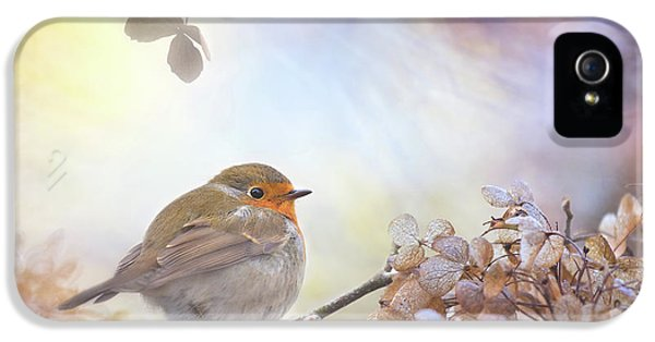 Robin On Dreams IPhone 5 Case