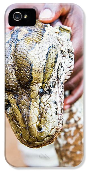 Rock Python Recovered From Poachers IPhone 5 Case by Peter Chadwick