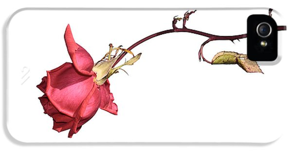 Rose For Isabel IPhone 5 Case by Goyo Ambrosio