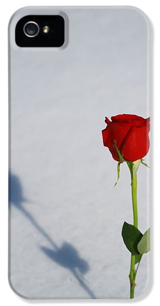 Rose In Snow Spring Approaches IPhone 5 Case by Dan Sproul