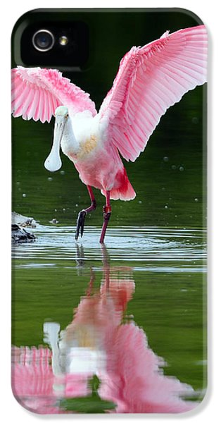 Roseate Spoonbill IPhone 5 Case by Clint Buhler
