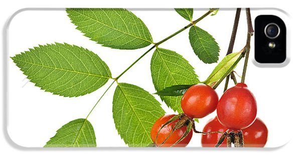 Rosehips On White IPhone 5 Case