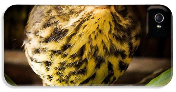 Round Warbler IPhone 5 Case