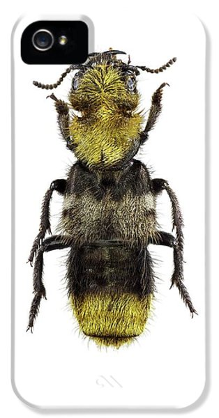 Emu iPhone 5 Case - Rove Beetle by F. Martinez Clavel