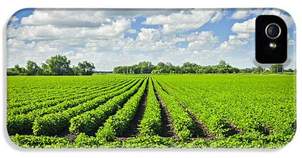 Rows Of Soy Plants In Field IPhone 5 Case