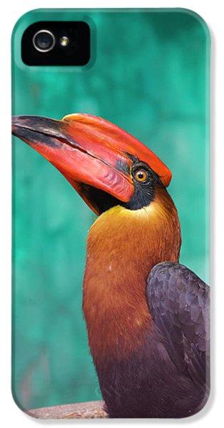Hornbill iPhone 5 Case - Rufous Hornbill (buceros Hydrocorax by Keren Su