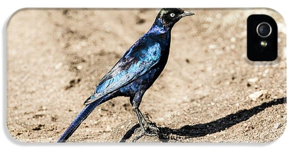 Ruppell's Glossy-starling IPhone 5 Case by Photostock-israel