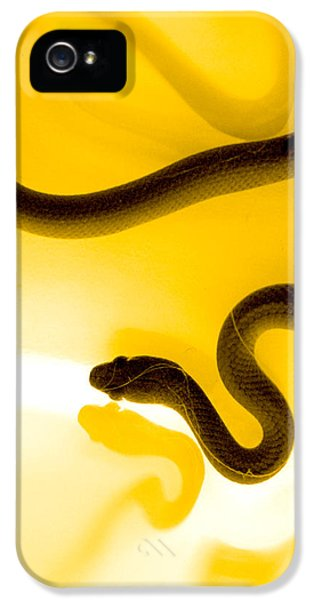 Snake iPhone 5 Case - S by Holly Kempe
