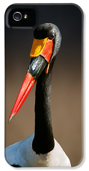 Saddle-billed Stork Portrait IPhone 5 / 5s Case by Johan Swanepoel