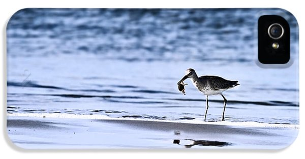 Sandpiper IPhone 5 Case by Stephanie Frey