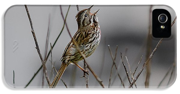 Savannah Sparrow IPhone 5 Case by Marty Saccone