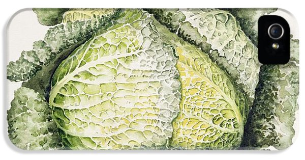 Savoy Cabbage  IPhone 5 Case by Alison Cooper