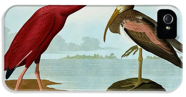 Ibis iPhone 5 Case - Scarlet Ibis by John James Audubon