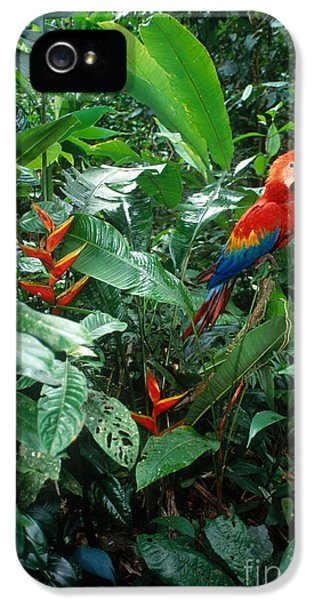 Scarlet Macaw IPhone 5 Case by Art Wolfe