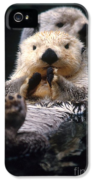 Sea Otter Pup IPhone 5 Case by Mark Newman
