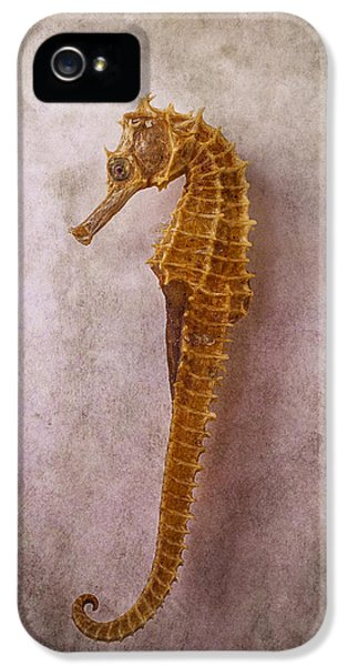 Seahorse Still Life IPhone 5 Case by Garry Gay