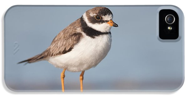 Semipalmated Plover IPhone 5 Case by Clarence Holmes