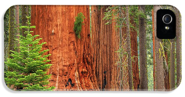 Sequoias IPhone 5 Case by Inge Johnsson