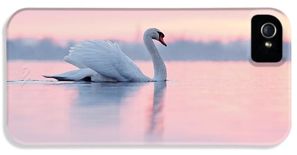 Swan iPhone 5 Case - Serenity   Mute Swan At Sunset by Roeselien Raimond