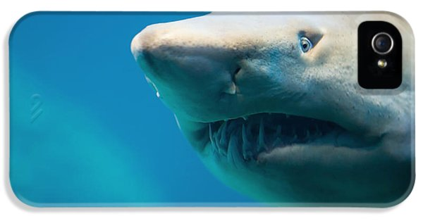 Bull iPhone 5 Case - Shark by Johan Swanepoel