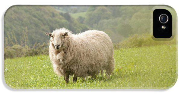 Sheep In Pasture IPhone 5 Case by Juli Scalzi