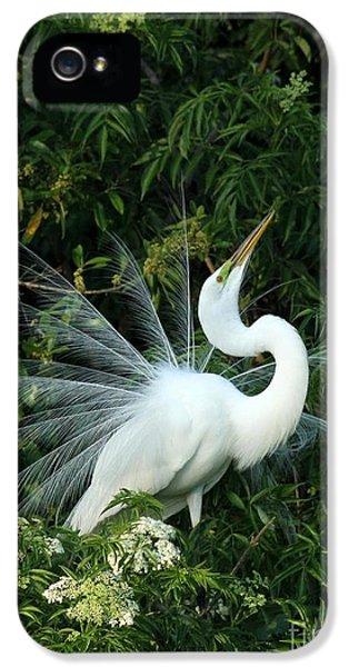 Showy Great White Egret IPhone 5 / 5s Case by Sabrina L Ryan