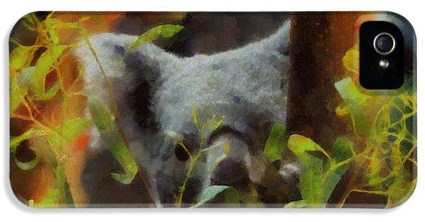 Shy Koala IPhone 5 Case by Dan Sproul
