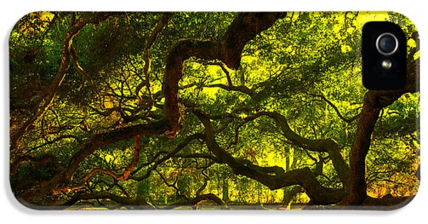 Side Limbs Of The 1400 Year Old Angel Oak IPhone 5 Case by Susanne Van Hulst
