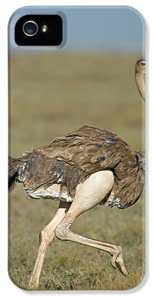 Ostrich iPhone 5 Case - Side Profile Of An Ostrich Running by Panoramic Images