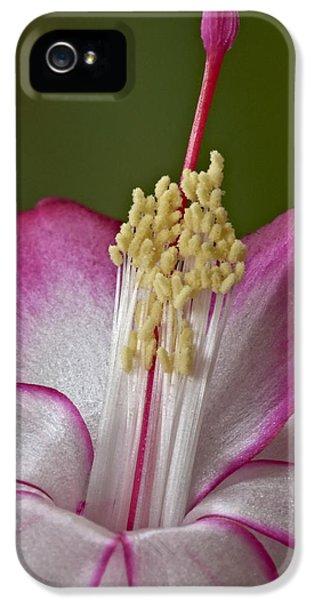 Silk Petals IPhone 5 Case by Susan Candelario
