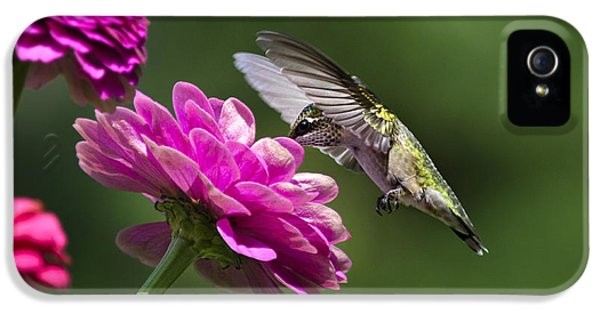 Simple Pleasure Hummingbird Delight IPhone 5 Case by Christina Rollo