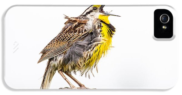 Singing Meadowlark 3rd Of 3 IPhone 5 / 5s Case by Bill Swindaman